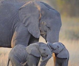 elephant, animal, and family image