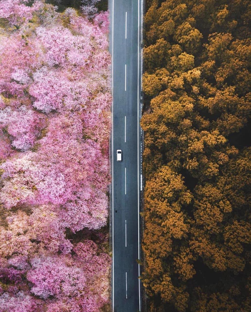 autumn, car, and pink image