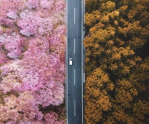 autumn, car, and pink image
