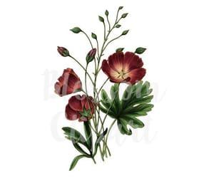digital print, flower print, and botanical print image