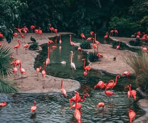 flamingo and nature image