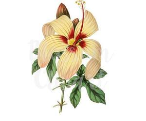 digital print, flower print, and clipart flower image