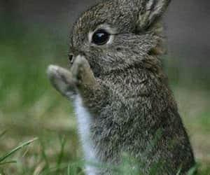 Animales, naturaleza, and pequeño image