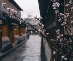 flowers, japan, and aesthetic image