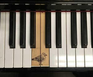 music, piano, and bird image