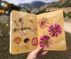 art, flower, and herbarium image