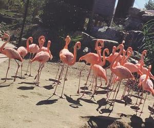 animals, flamingo, and pink image