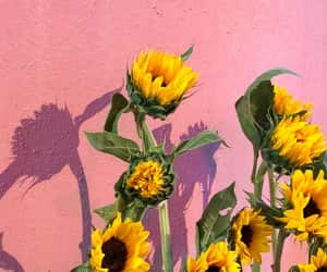 wallpaper, sunflower, and kpop image