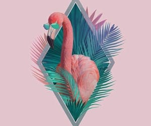 pink, wallpaper, and flamingo image