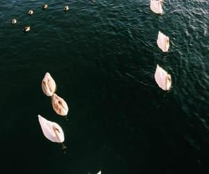 lake, swim, and nature image