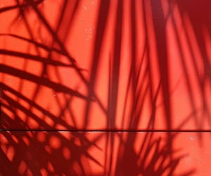 photography, red, and shadow image