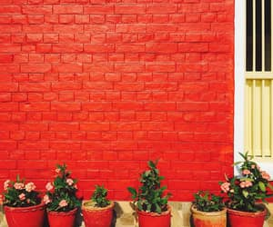 photography, planters, and red image