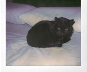 analog, black, and black cat image