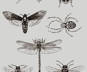 insect, tattoo, and drawing image