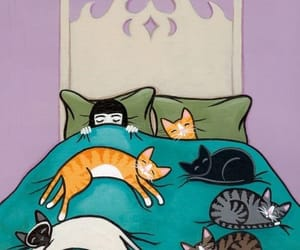 cats, felinos, and habitacion image