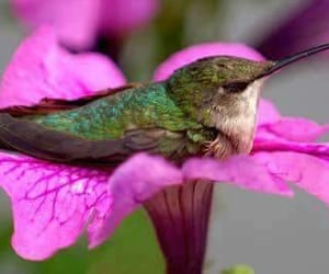 hummingbird, flowers, and bird image