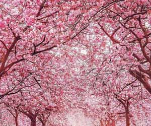 pink, flowers, and landscape image
