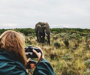 adventure, elephant, and photography image