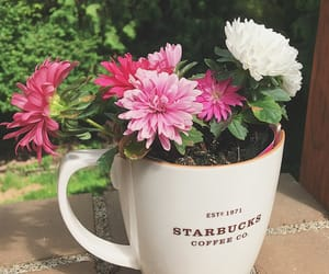 coffee, pink flowers, and plants image