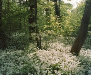 flowers, plants, and forest image