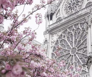 notre-dame, pink, and paris image