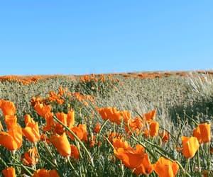 flowers, gif, and orange image