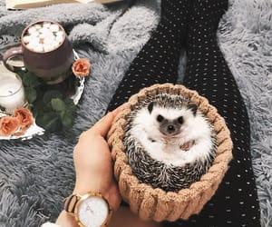 hedgehog, animal, and pet image
