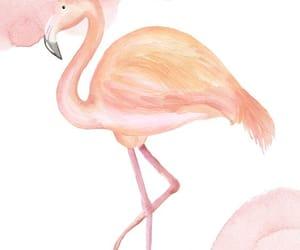 background, bird, and flamingo image