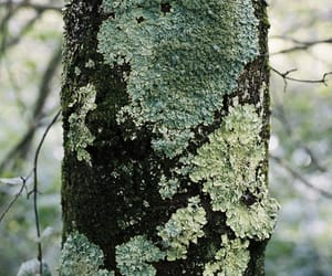 bark, forest, and lichen image
