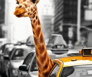 city and zebra image