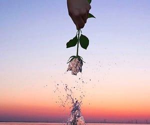 ocean, rose, and sea image