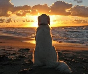 dog, beach, and sunset image