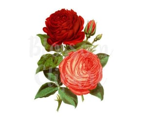 etsy, png flower, and clipart rose image