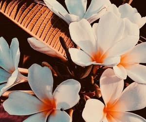 flowers, wallpaper, and summer image