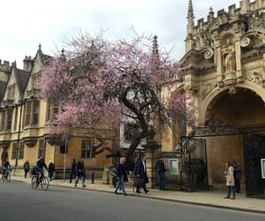 oxford, spring, and tree image