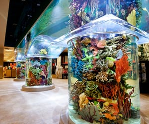 aqua, fish, and aquarium image