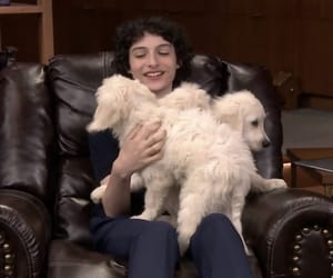dog, dogs, and jimmy fallon image