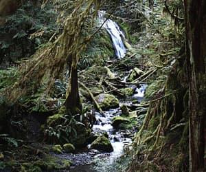 belleza, naturaleza, and bosque image