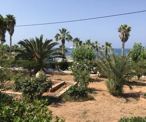 crete, plants, and throwback image