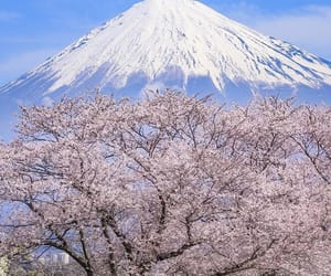 japan, sakura, and spring image