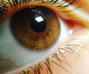 aesthetic, iris, and brown image