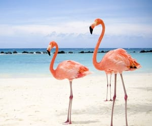 flamingos, pink, and summer image