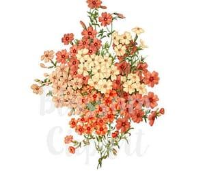 etsy, vintage flower, and digital download image