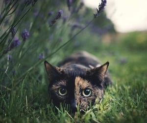 black, kitten, and nature image