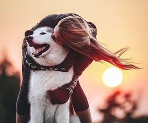 adorable, animal, and freedom image