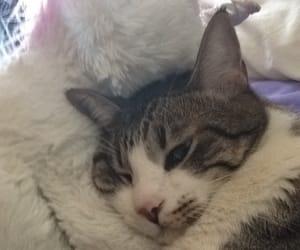 cat gato funny cat image