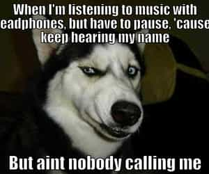 chilling, dog, and funny image