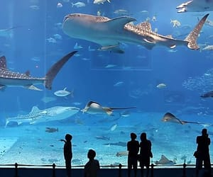 fish, aquarium, and shark image