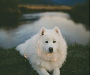 dog, Samoyed, and white image