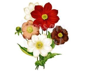 etsy, flower illustration, and vintage illustration image